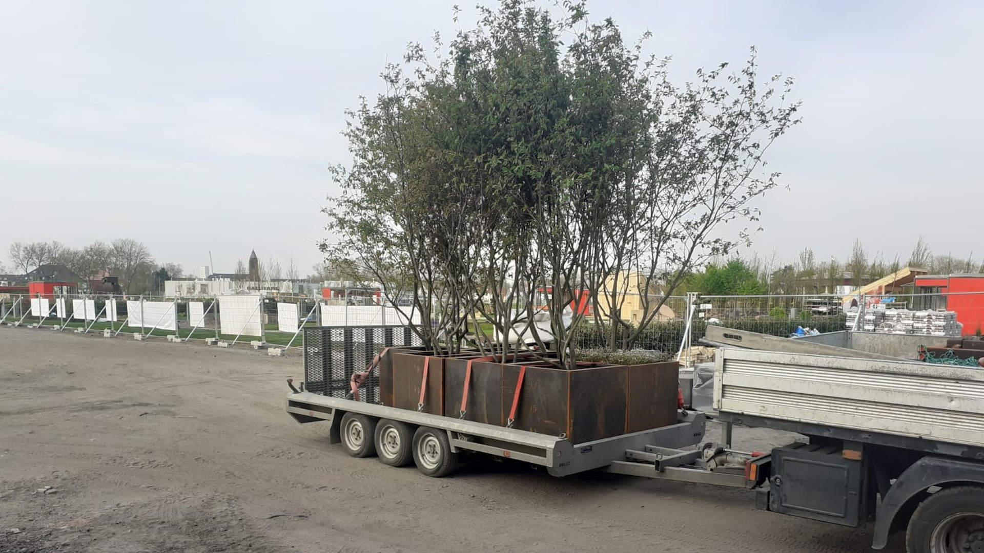 pflanzentransport.1